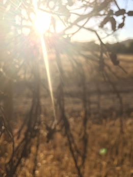 fuzzy-morning-tree-sun